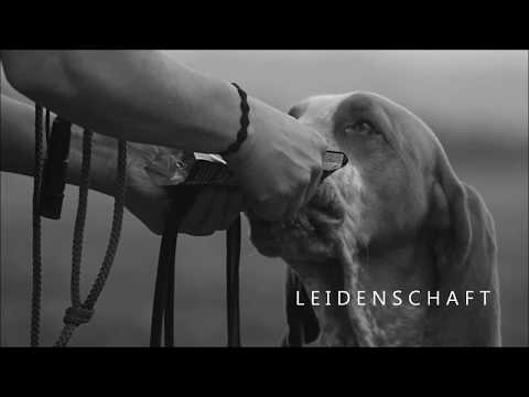 Hundeschule Loewenzahn für Familienhunde & Jagdhunde