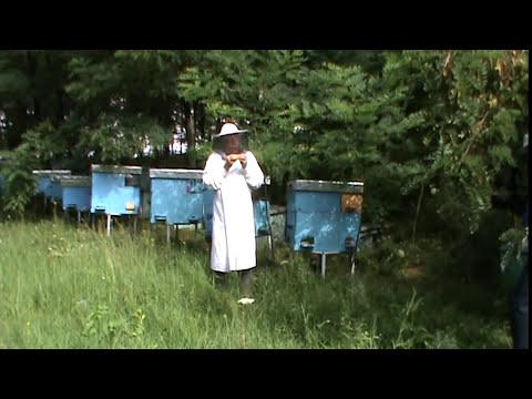 Video Apicultura - Despre apicultura stationara vs pastoral, inmultirea dirijata a matcilor,  etc