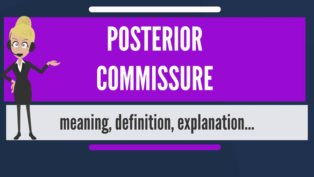 What does posterior mean in anatomy
