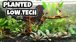 Low Tech Planted Tank (How to setup)