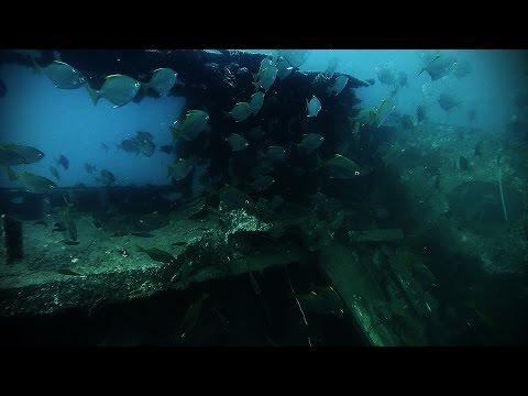 Free-Diving at Bongoyo Shipwreck in Tanzania