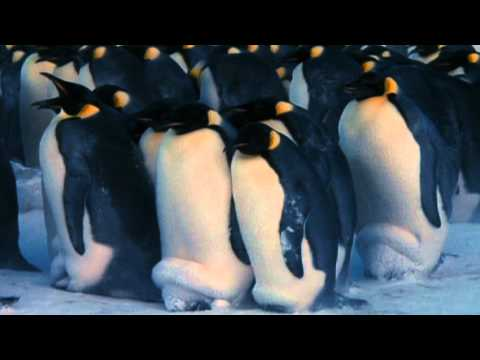 Farce of the penguins for Farcical parody