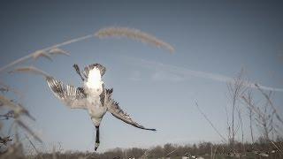 "Kansas Waterfowl Wheat Field Goose Hunting: ""Plan B"" - Fowled Reality"