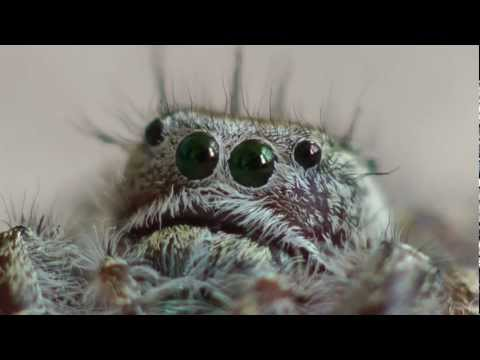 Jumping Spider Got Cute
