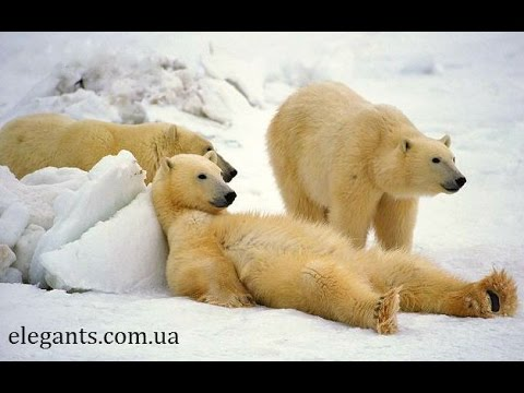 Our little son Milan overcame the polar bear!