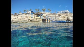 Sharm Plaza - Underwater life - Sj7