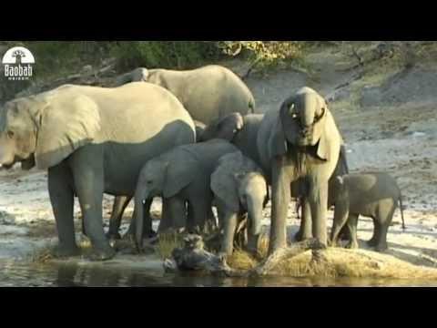 Rondreis Zuid-Afrika – Baobab Reizen