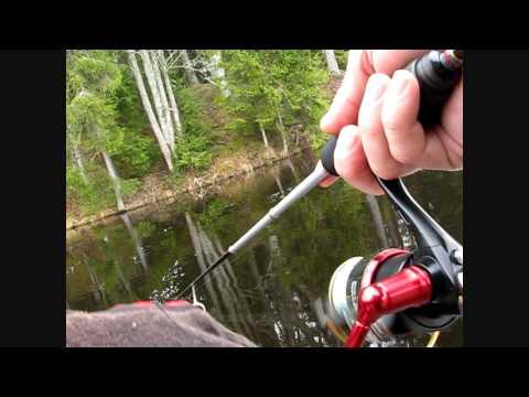 видео о ловле прудовой форели