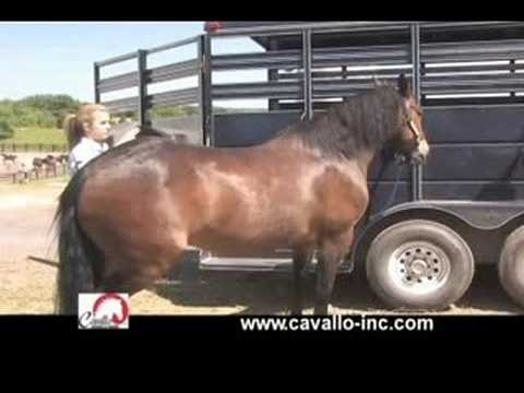 Cavallo Total Comfort System Horse Saddle Pads