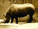 サイ〜Rhinoceros〜