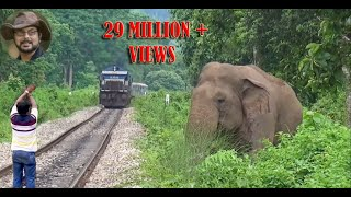 (5.56 MB) Asim Trying To Stop The Train To Save Elephant. Mp3