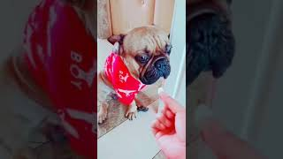 [2019]Funny videos of cute dogs and cats 081