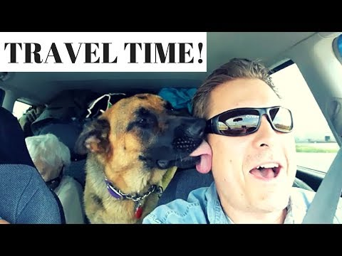 Travelling with German Shepherd and birds