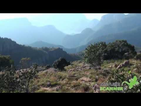 Panorama Route Zuid-Afrika – NatureScanner