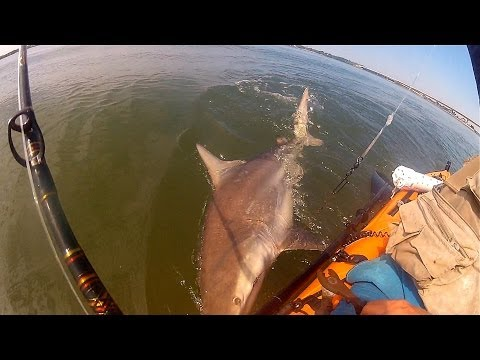 Fishing Stuart, FL - Two Sharks One Ladyfish* (SFW)