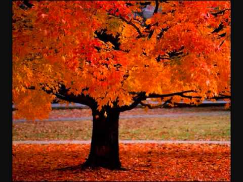 Four Seasons ~ Vivaldi video