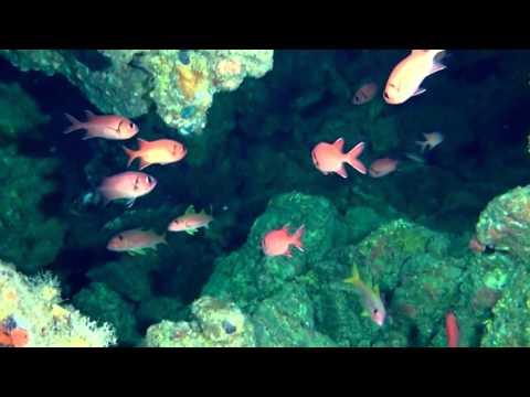 Коралловый риф: Подводный мир Египта. / Документальный фильм