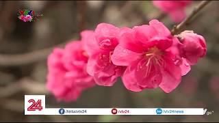 Đền Ngọc Sơn sáng mùng 1 Tết   VTV24
