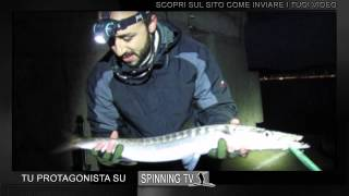 Pesca a spinning: Barracuda in inverno