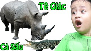 Bé đi sở thú xem CON TÊ GIÁC & CON CÁ SẤU ♥ Let's Go To The Zoo