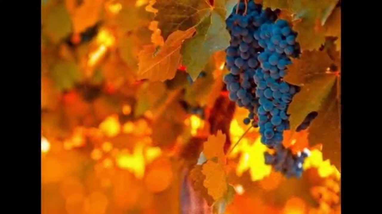 В Китае открылся центр популяризации грузинского вина