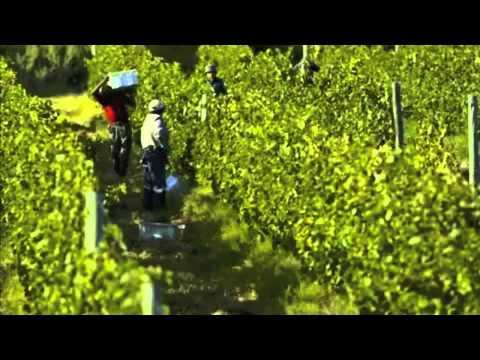 Organic Wines