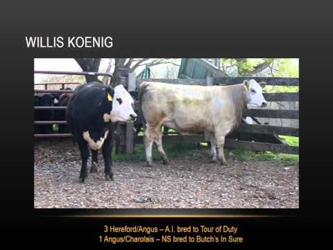Show-Me-Select Replacement Heifers