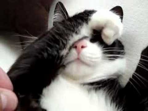 sweet cat video