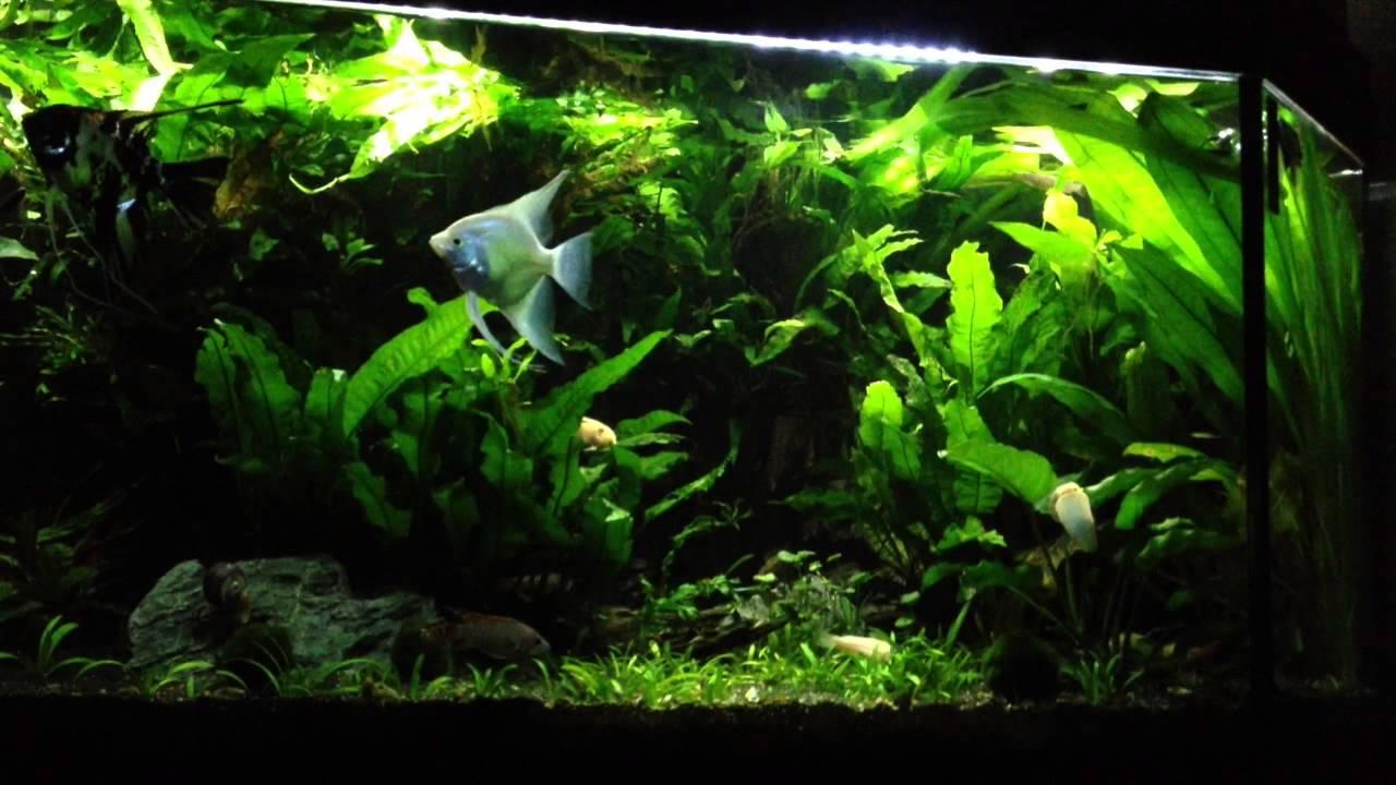 liwebe naturnahe led beleuchtung f r aquarien und mehr wolkenspiel youtube. Black Bedroom Furniture Sets. Home Design Ideas