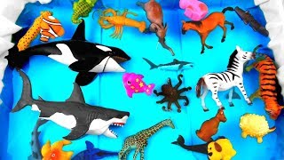 Learn Wild Zoo Animal Toys For Kids Learn Colors With Animal Names