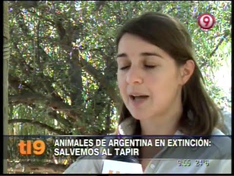 Salvemos al tapir - Animales en extinción - Argentina