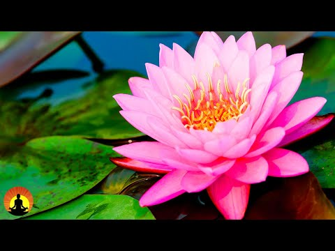 Relaxing Spa Music, Sleep Music, Stress Relief, Meditation, Healing, Yoga, Zen, Relax, Sleep, ☯3608