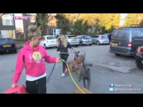 Katie Price dog escapes...