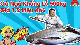 Cách Người Nhật xử lý cá 500kg khiến người xem thán phục   Trị giá con cá lên đến 1,2 triệu $