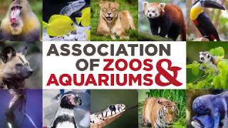 Happy Hollow | Learn about Jaguars with our Zoo Curator