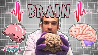 Science for kids | Brilliant Brains | The Nervous System | Experiments for kids | Operation Ouch