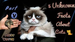 Unknown Facts about Cats   Part V   Cat Facts   Fact Gyani
