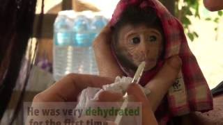 Baby Monkey Refused By His Own Mother