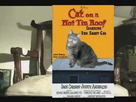 Cat Madness Episode Two- Mouseterpiece Theatre Video