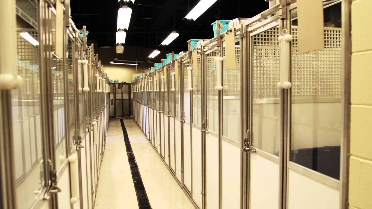 Modular Dog Kennel Systems