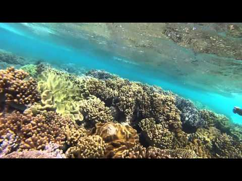 Michaelmas Cay Snorkeling   Cairns Australia