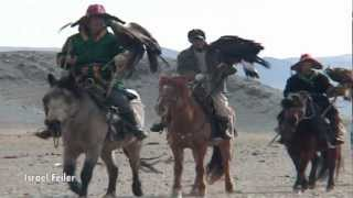 Golden eagle hunting training