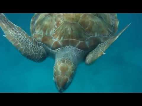Sea turtles encounter