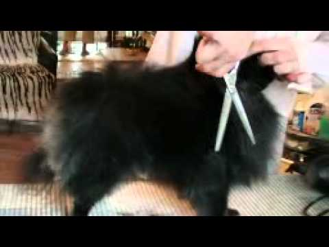 обучение стрижки собак видео