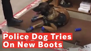 Police Dog's Funny Reaction To New Snow Boots Goes Viral