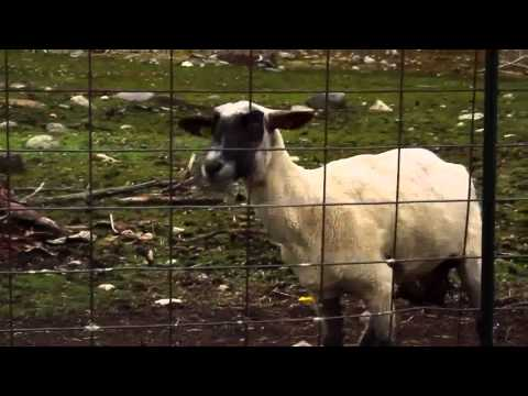 Manu & The Singing Sheep - Piano Concerto (The Screaming Sheep remix)