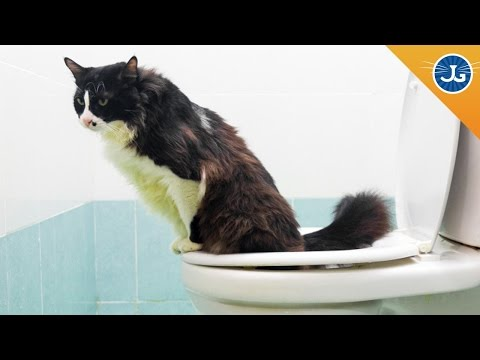 Why You Should Not Toilet Train Your Cat video