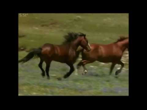 Александр Розенбаум - Песня коня цыганских кровей
