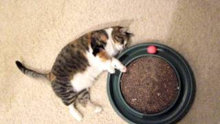 Lazy Cat Playing