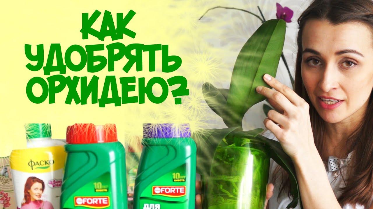 Подкормка орхидеи своими руками